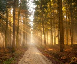 Sustainably managed forest