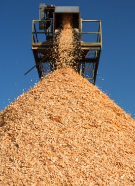 wood chips coming off conveyor