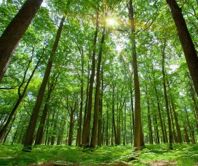 forest products industry sustainability