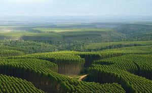 Forestland in Brazil