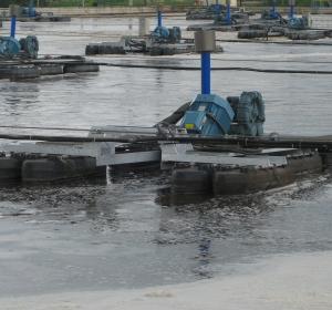 mill effluent management