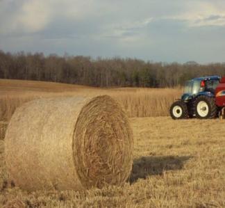 baling switchgrass